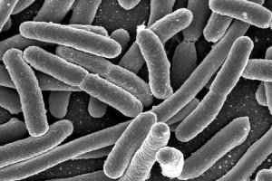 Las bacterias pueden generar energía a partir de las aguas residuales