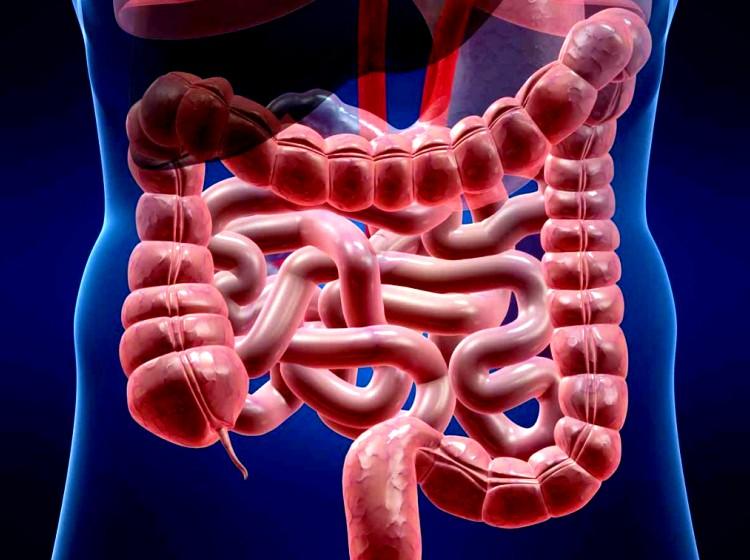 """Investigación destapa el """"eje intestino-cerebro"""""""