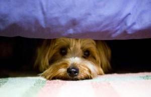Cómo evitar que sus mascotas se estresen