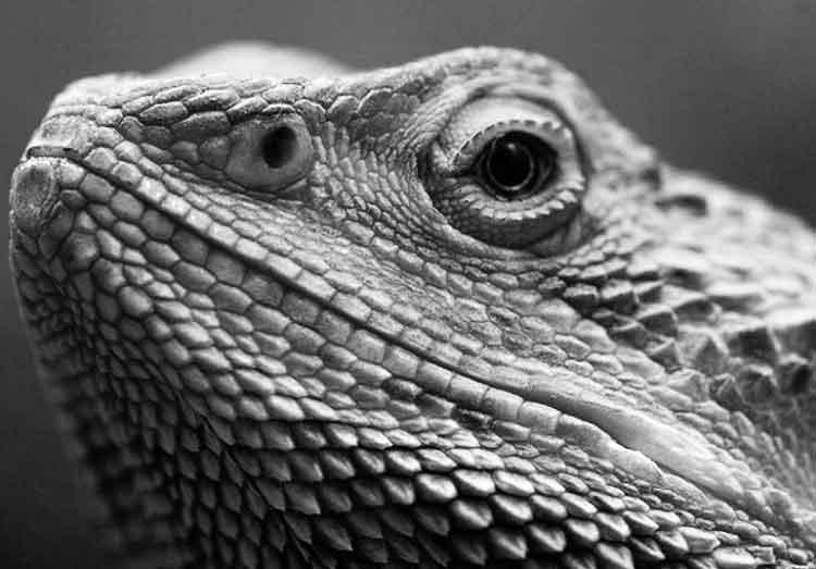 Descubren dragón chino