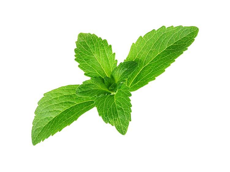 7 cosas que usted no sabe acerca de la Stevia o Estevia