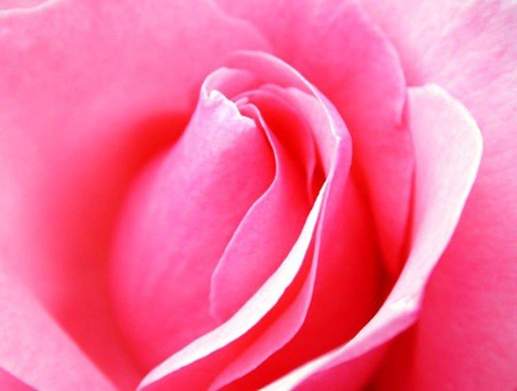 por fre rosa sidorna