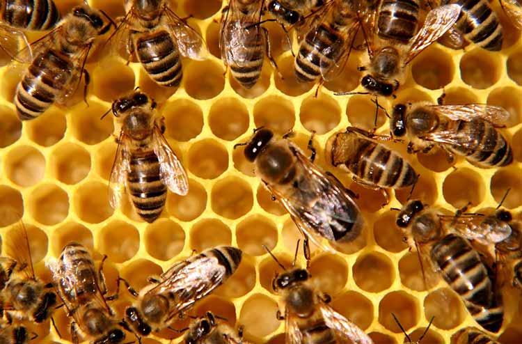 Honey Nut Cheerios da de nuevo a las abejas