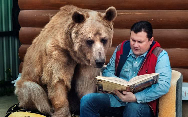 El oso pardo de la familia rusa – inesperada mascota
