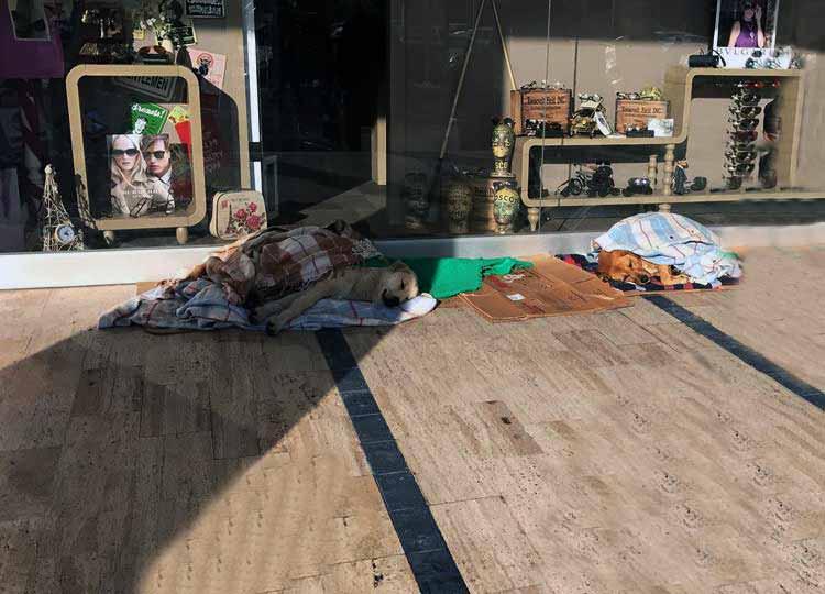 Centro comercial es refugio de perros abandonados