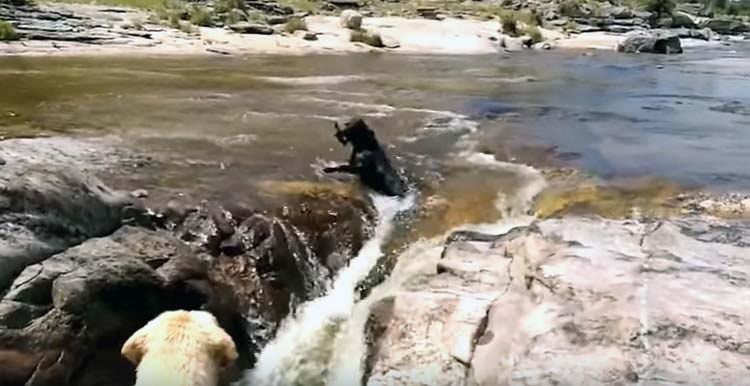 El rescate de un perro por otro perro se hizo viral