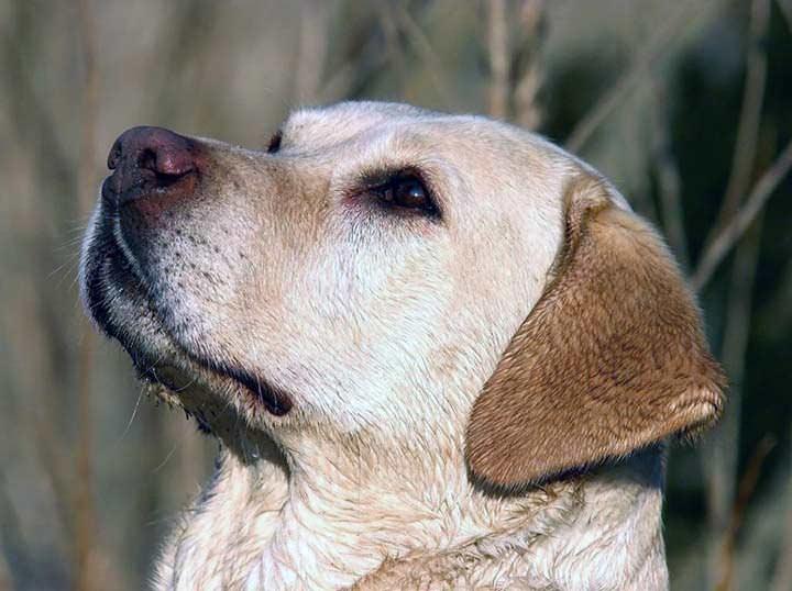 Tener un perro puede mejorar la salud