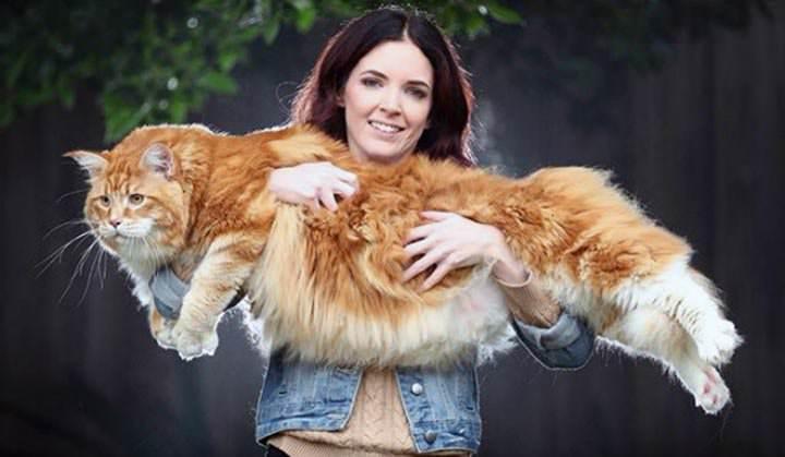 Más que Lassie - el gato más grande del mundo