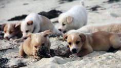 El refugio en la isla que es el paraíso de los perros