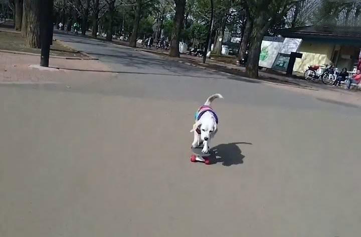 El perro de la Patineta ya tiene nuevos trucos