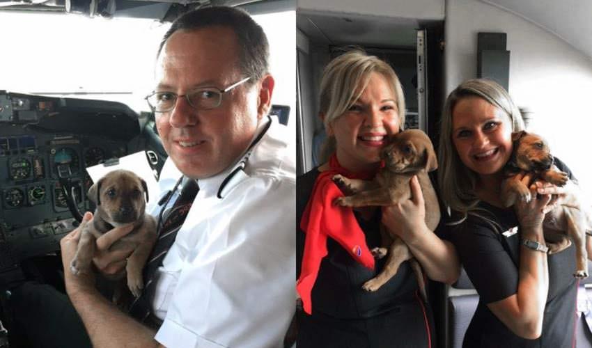 Aerolínea rescató mascotas huérfanas en su cabina