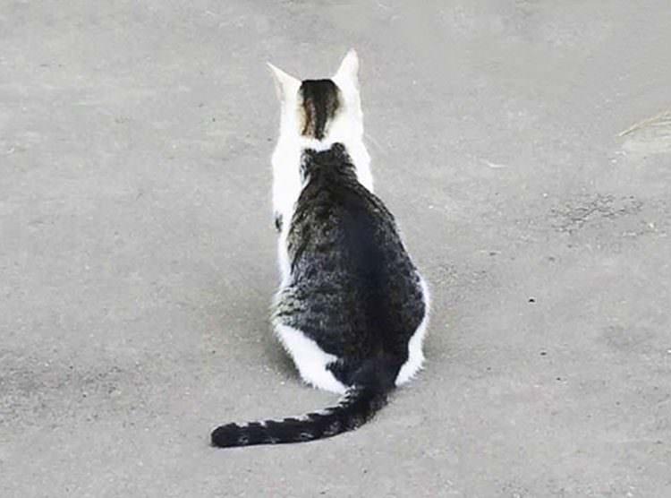 Gato con gato en su espalda viral en Japón