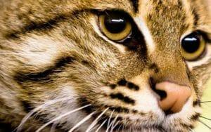 Los Gatos tienen 7 vidas ¿Preguntas y respuestas sobre los gatos?