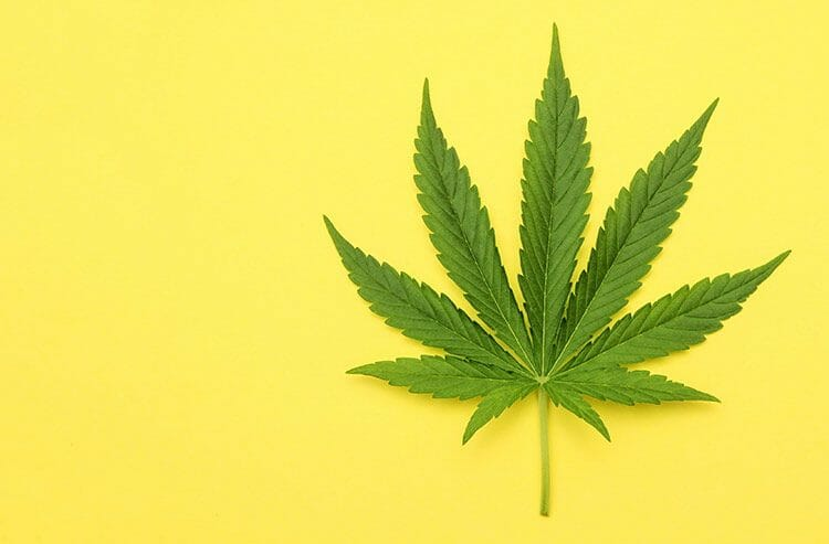Qué es el aceite de CDB – aceite de marihuana para uso médico