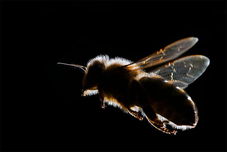 Científicos chinos se inspiran en las abejas para crear aviones
